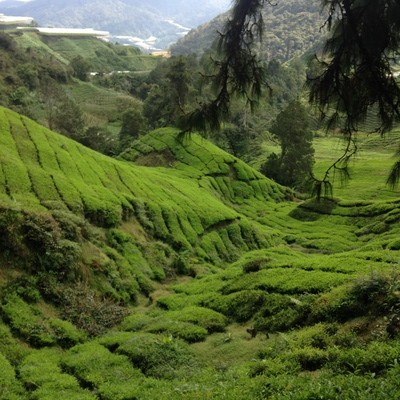 View of the Cameron Highlands